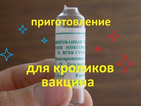вакцина против миксоматоза и вгбк для кроликов приготовление вакцины