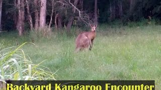 Nice Kangaroo Backyard Experience