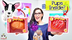 Squishies TRANSFORM Into Puppies! Sweet Pups Surprise Toys! Doc's Playhouse