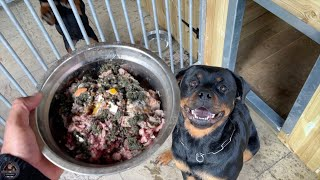 Feeding Our Rottweilers RAW Diet  Part 2