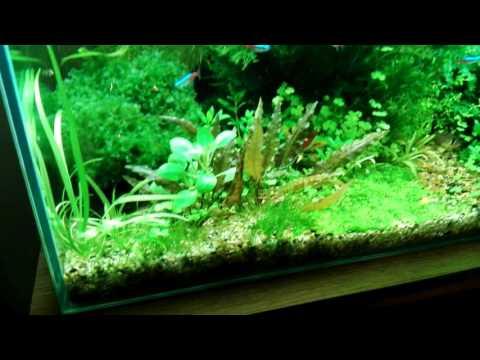 Красивый аквариум 100 литров
