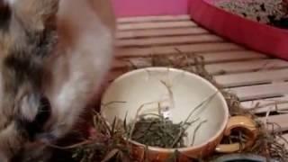 ピーターが顔を洗っている映像です。大好物の小松菜を食している映像も...