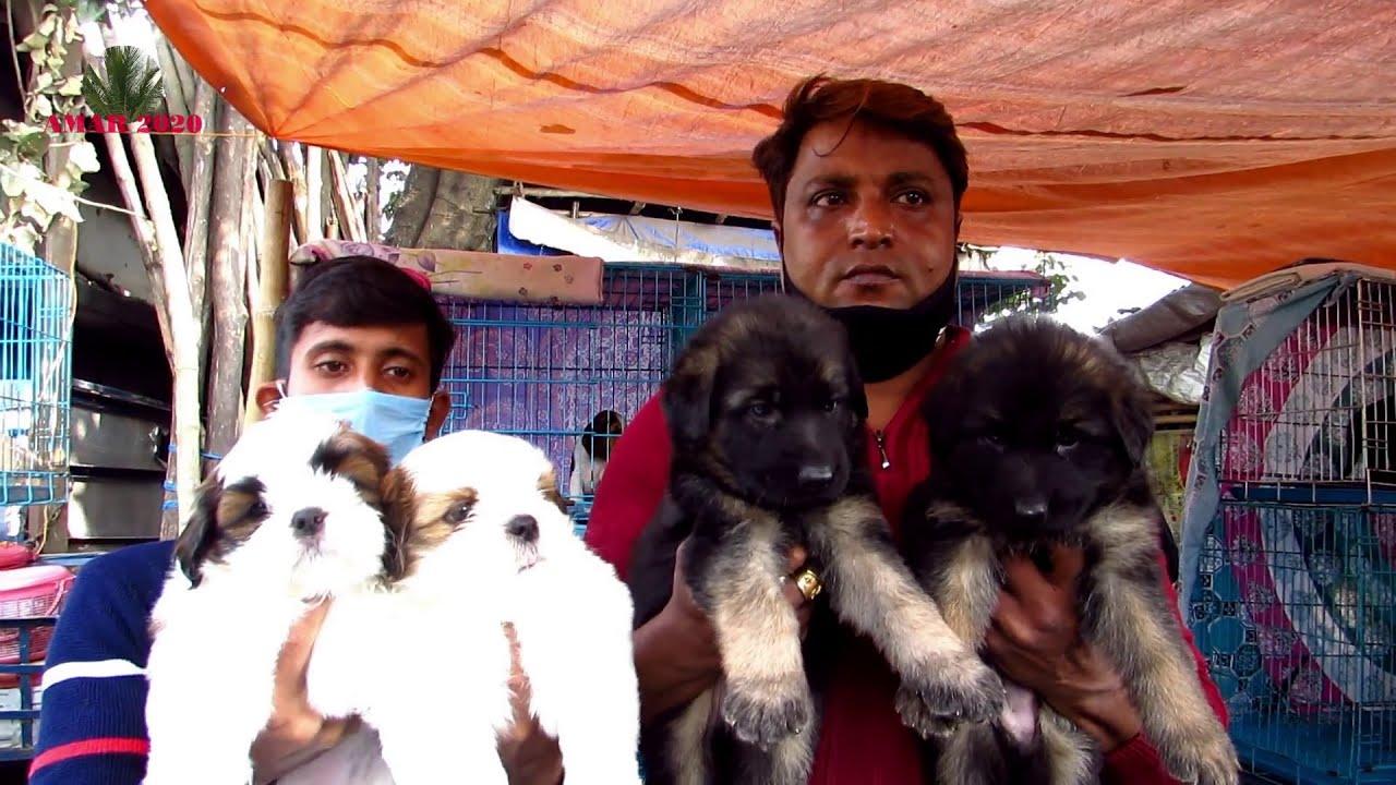 RECENT DOG PUPPY PRICE AT GALIFF STREET PET MARKET KOLKATA | CUTE DOG PUPPY | 3RD JANUARY 2021 VISIT