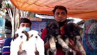 RECENT DOG PUPPY PRICE AT GALIFF STREET PET MARKET KOLKATA   CUTE DOG PUPPY   3RD JANUARY 2021 VISIT