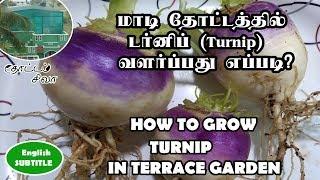 டர்னிப் வளர்ப்பது எப்படி? வீடியோ இதோ !!! (Growing Turnip)