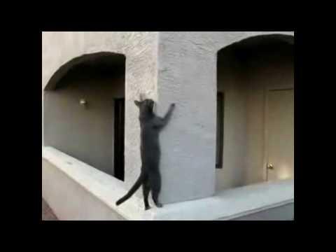 Cat Parkour
