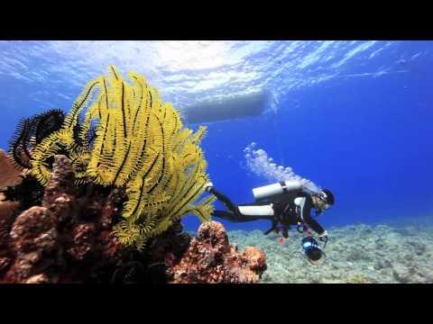 ダイビング サイパン・ナフタン Super Blueの海へ