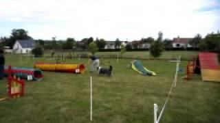 Idtc Guernsey - Agility Rally (1)
