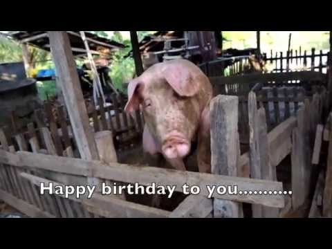 happy birthday pig song