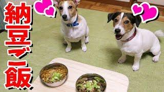今日は納豆ご飯を食べるよ! リンもカイも大好きだったよね^^ 混ぜ混ぜ...