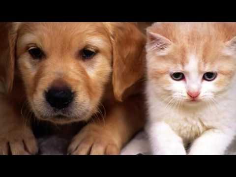 Фото красивых собак и кошек