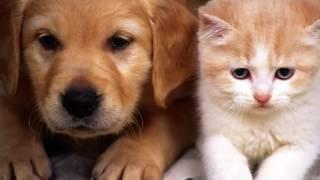 Наши красивые На  фото кошки и собаки Наши красивые кошки умываются