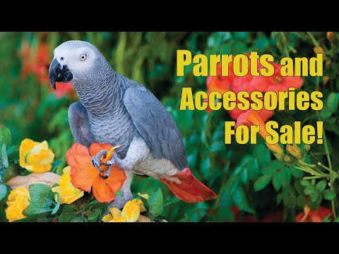Arizona Bird Store   Parrots - Exotic Birds - Cages For Sale in Mesa AZ