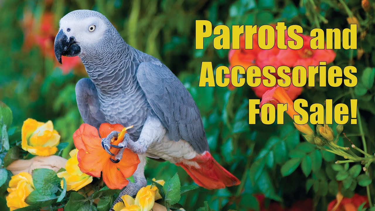 Arizona Bird Store | Parrots - Exotic Birds - Cages For ...