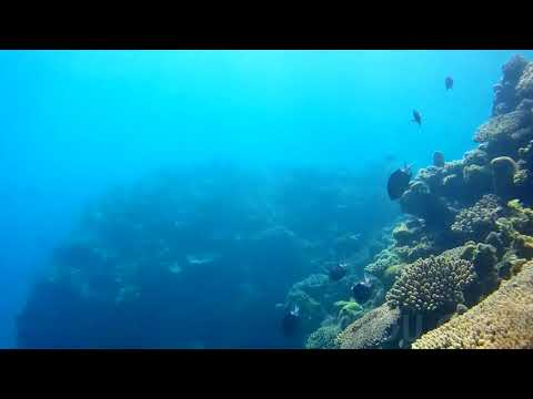 久しぶりのドロップオフで素潜り。離島の海はサンゴも魚も生き生き。