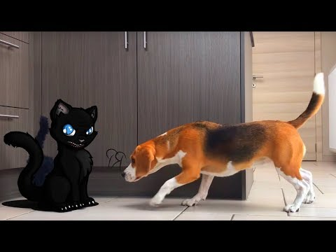 Halloween : Funny Dogs Vs Scary Black Cat