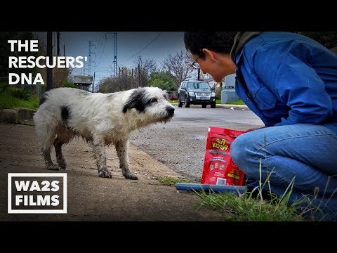 Fastest Rescue & Reunion of Lost Hungry Dog Ever - Amazing Hope for Paws Reunion Due to a Microchip