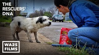 Fastest Rescue & Reunion of Lost Hungry Dog Ever Because of Microchip  Hope For Dogs