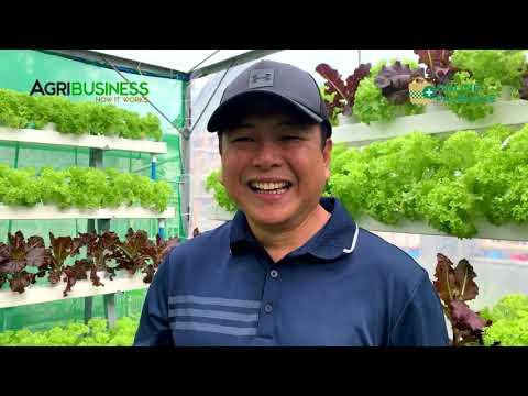 MINI FARM sa harap ng bahay FULL VERSION: Hydroponics, Vertical Farming DIY -