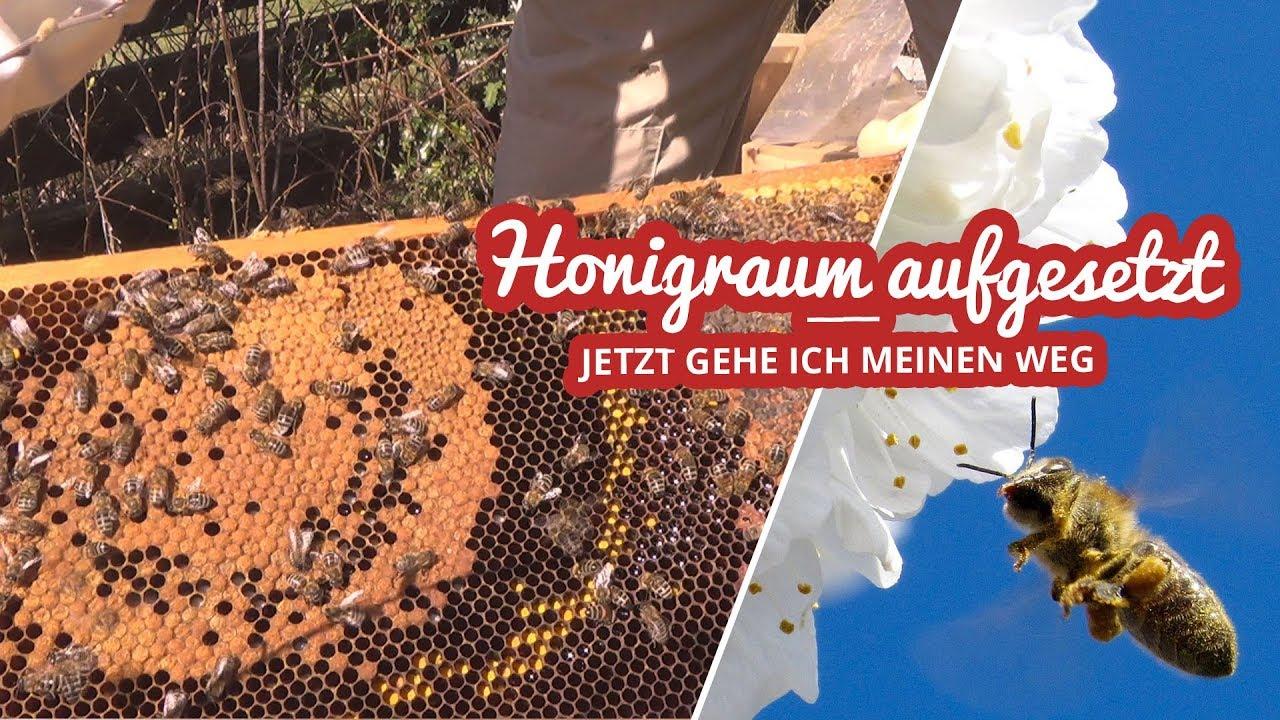 Honigraum aufgesetzt | Einfach Imkern Artikelbild