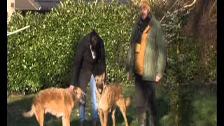 Планета собак  Бельгийская овчарка  Лакенуа  Бельгия(, 2014-09-21T10:35:21.000Z)
