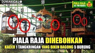 PIALA RAJA DIHEBOHKAN Oleh Kacer NO 59 Yang Bikin BAGONG 5 Burung SEKALIGUS!!