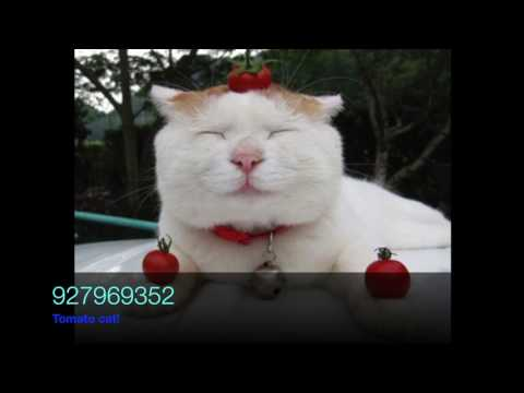 Roblox 11 Cat Picture Codes Youtube