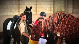 War Horse - Echt paard onder de indruk van Joey uit War Horse