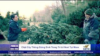 PHÓNG SỰ CỘNG ĐỒNG: Chặt cây thông trang trí lễ Giáng Sinh tại Masschusetts