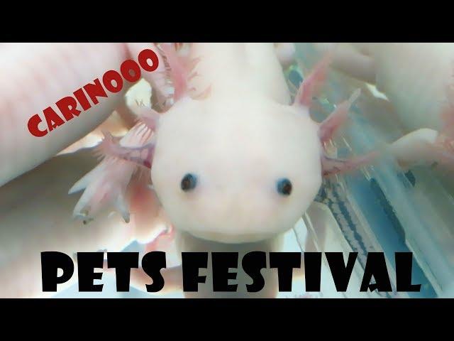Piacenza Pets Festival - GATTI OVUNQUE