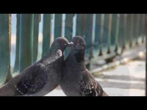 Music To Make Love By Solomon Burke Youtube