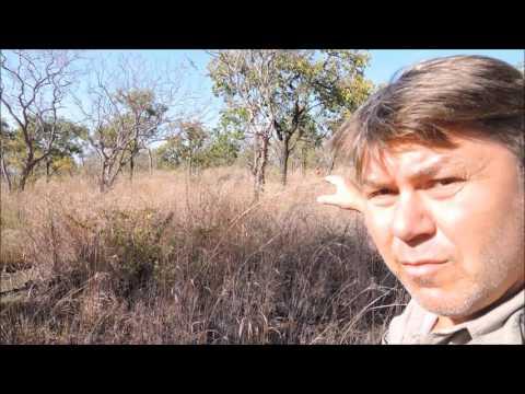 Охота на слона в Африке с Tokkroos Safari – elephant hunting
