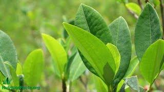 Mocné rostliny