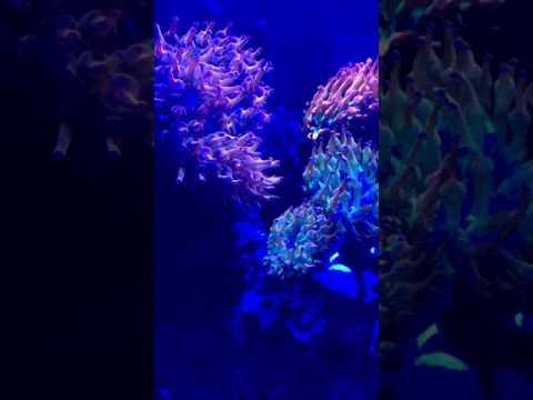 Aquarium Specialty 60 Gallon Clownfish & Anemone Fish