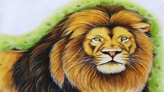 Pintura de Animais – Leão
