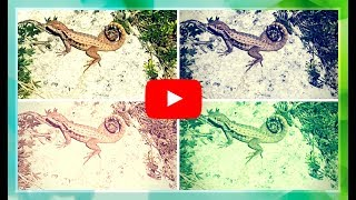 Bahamian Lizard in Nassau 🌎Lizards of The Bahamas Kids Adventures With Sweetie Fella Aleks