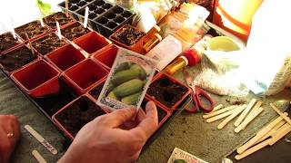 A Comprehensive Guide to Indoor Seed Starting 24 Vegetables & Herbs: Digital Table of Contents