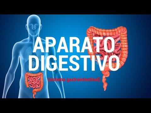 Aparato digestivo (sistema gastrointestinal)