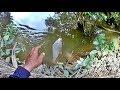 Memancing Di Sungai || 2020 #2 Ikan Selat