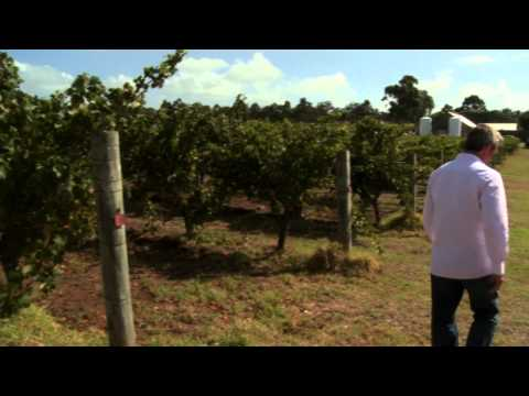 "Wine Sense Season 1 Episode 102 (Chardonnay): ""So You Don't Like Chardonnay"""