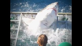 Viral Shark Video Shows People Doing Something Illegal