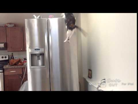 slow motion cat jumping on a fridge