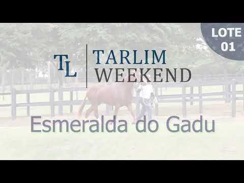 Lote 01 - Esmeralda do Gadu (6ºLeilão Tarlim)