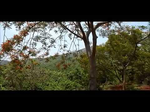 Panchalingeswar, Nilgiri, Chandipur, Kuldiha Forest, Devkund in Orissa. - Part 6.