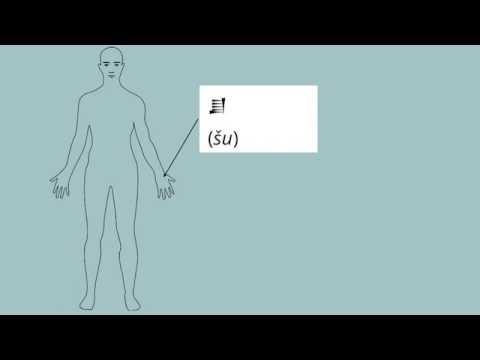 Basic Semitic Vocabulary - Body Parts