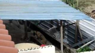 Repeat youtube video Dog abuse in Malaysia - 26 September, 2011.mp4