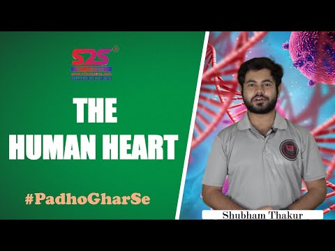 Class 10 Science Ch 6 - Human Heart | Structure & Functions Circulatory System How Human Heart Works