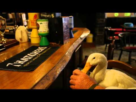 SWNS DRINKING DUCK
