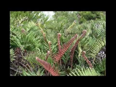 Chiloe Island Travel Video