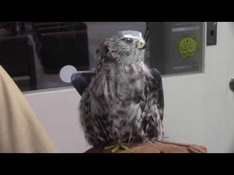 Paramus Catholic High School Student Builds Mechanical Bird